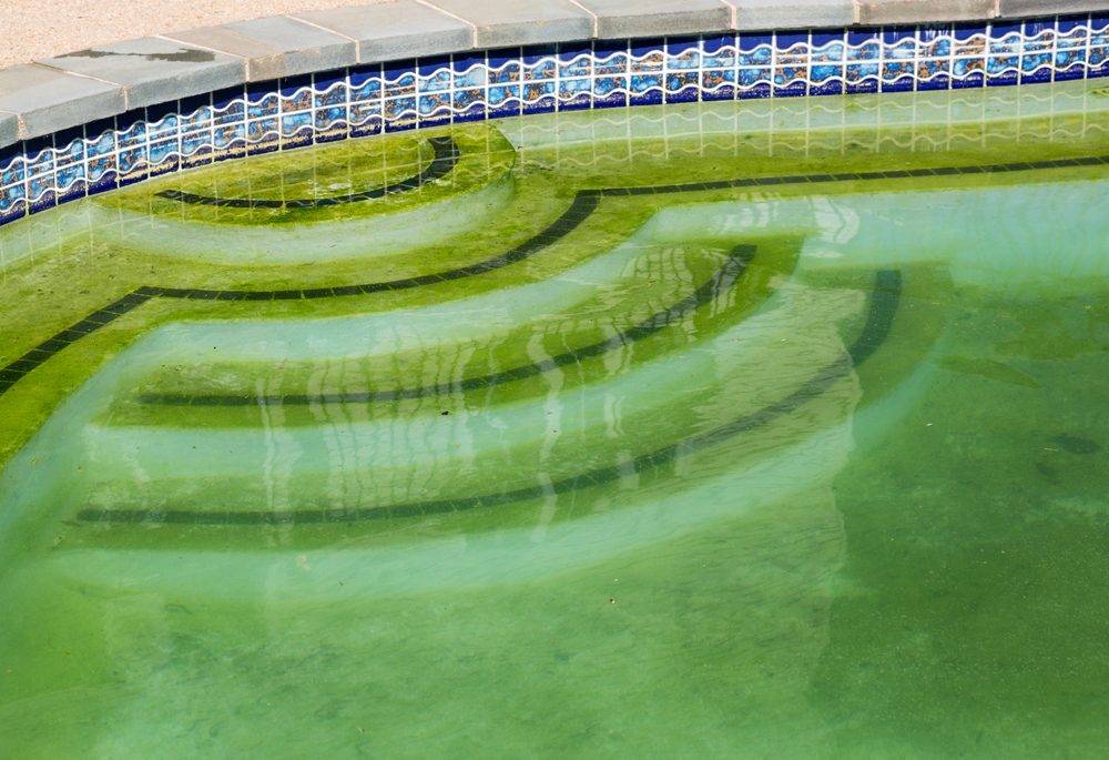 algae in a swimming pool